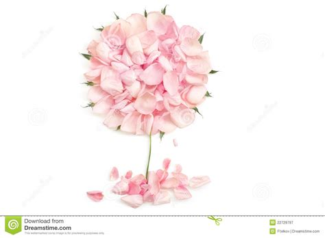 drawing  rose petals royalty  stock photography