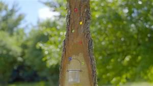 Sichtzäune Aus Holz : video deko stele aus holz selber machen mein sch ner garten ~ Watch28wear.com Haus und Dekorationen