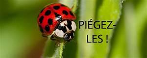 Se Débarrasser Des Araignées : apsm extermination rive sud punaises de lit araign es ~ Louise-bijoux.com Idées de Décoration