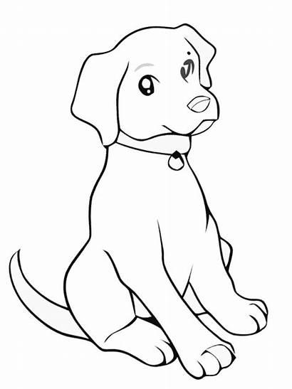 Labrador Puppy Kolorowanka Colouring Szczeniak Labradora Kleurplaat