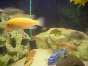 Fische Aquarium Hamburg : aquarium fische zubeh r in hamburg kaufen bei deine ~ Lizthompson.info Haus und Dekorationen