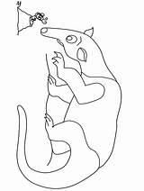 Hormiguero Oso Colorear Coloring Hormigueros Osos Dibujos Anteater Dibujo Animales Imagenes Animals Coloringpagebook Plantillas Bosque Formigas Colorir Horse Seal Fruit sketch template