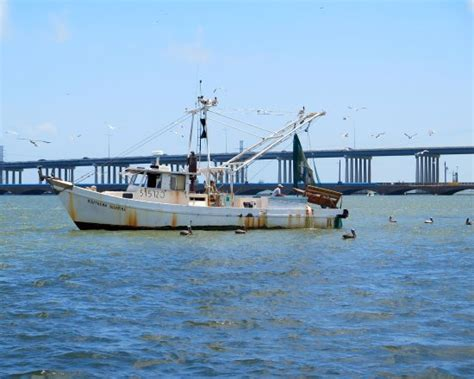 Boat Rental Galveston Tx by Getlstd Property Photo Picture Of Caribbean Boat