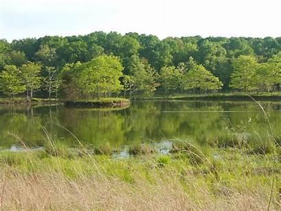 Lake Nature Land Lakes Between Areas Honker