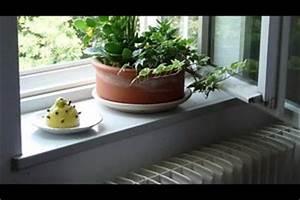 Hausmittel Gegen Mücken Im Zimmer : lavendel gegen m cken richtig anwenden ~ Orissabook.com Haus und Dekorationen