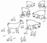 Line Goat Drawing Grazing Herd Goats Drawings Coloring Pages Sheep Maps Embroidery Colouring Herding Flickr Draw sketch template