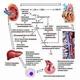 Гипертония гипотиреоз