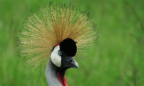 Uganda Birding Tours  Uganda Bird Watching Tour Kenya