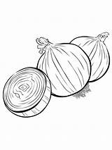 Onion Coloring Pages Colouring Vegetables Template Printable Must Popular Sketch Picolour Colors Recommended sketch template