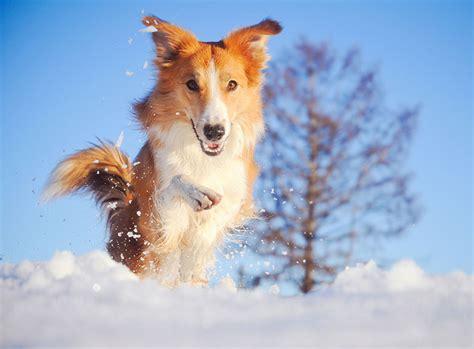 kein streusalz was tun schneegastritis beim hund erkennen und behandeln zooroyal magazin