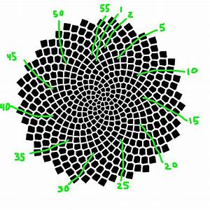 Fibonacci Numbers of Sunflower Seed Spirals – National ...