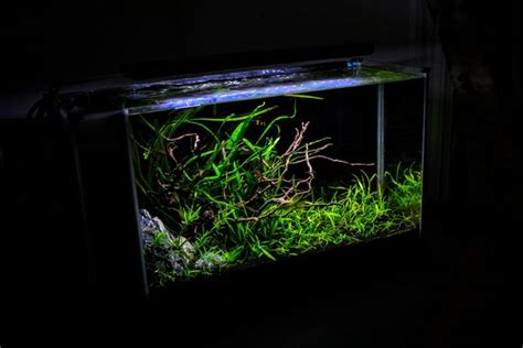 Fluval Spec Aquascape by Let Me See Some Fluval Spec V S Page 20 The Planted