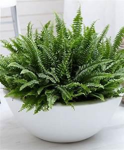 Grande Plante D Intérieur Facile D Entretien : plante d interieur facile d entretien maison design ~ Premium-room.com Idées de Décoration