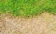 Traitement Mauvaise Herbe : mos in gazon bestrijden ~ Melissatoandfro.com Idées de Décoration