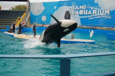 miami seaquarium attraction ticket