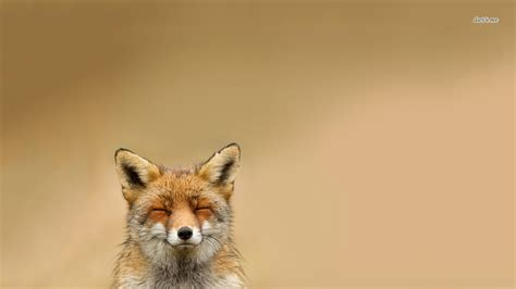 Fox Desktop Wallpapers And Backgrounds   Collection 12 ...