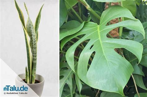 Große Pflanzen Für Drinnen