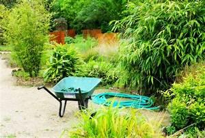 Bambou Brise Vue : prix et plantation d 39 une haie de bambous ~ Premium-room.com Idées de Décoration