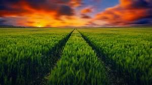 Countryside, Grass, Fields, Scenery, 4k, Wallpapers