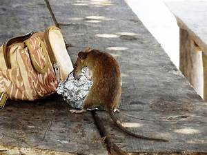 Ratten Bekämpfen Im Garten : ratten bek mpfen rattenkot in haus und garten ~ Michelbontemps.com Haus und Dekorationen