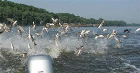 Pa Fish And Boat Test by Pa Environment Daily Tests Find Asian Carp Edna In Pa Wv