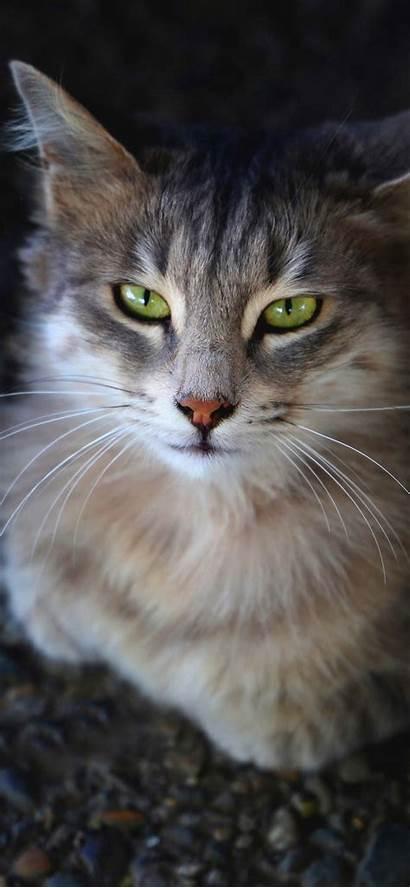 Iphone Cat Xr Wallpapers Xs Max Thumbnail
