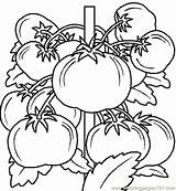 Coloring Vegetables Vegetable Printable Pages Fruits Sheets Fruit Colour sketch template