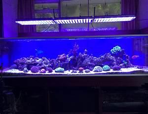 Aquarium Led Beleuchtung : atlantik serie auswahl der richtigen led aquarium beleuchtung aquarium led beleuchtung orphek ~ Frokenaadalensverden.com Haus und Dekorationen