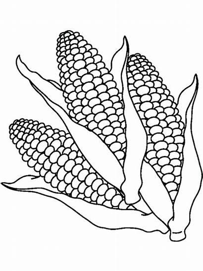 Corn Coloring Pages Printable Stalk Stalks Popcorn