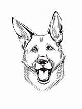 Shepherd German Coloring Pages Printable sketch template