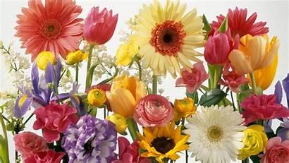 Spring Screensavers Desktop Flowers Wallpapers Background