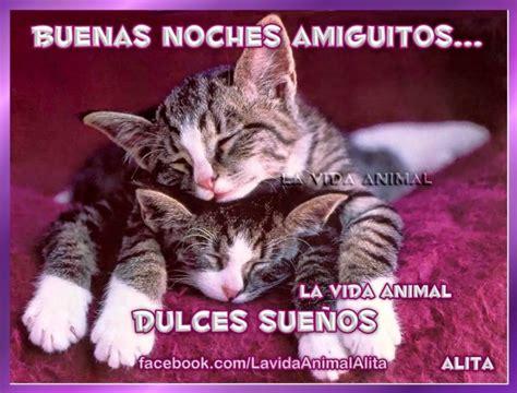 hermosos animalitos en imagenes  frases de buenas noches