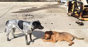 these two dogs bishop and lander are credited with