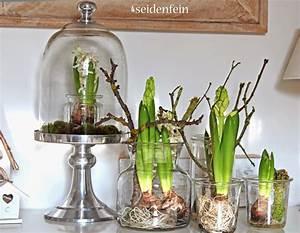 Blumenzwiebeln Im Glas : pin von norelys belisario auf naturalworld pinterest blumenzwiebeln osterideen und ~ Markanthonyermac.com Haus und Dekorationen