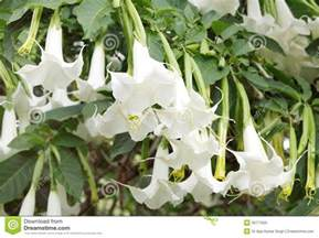 Climbing Vine Plants with White Flowers