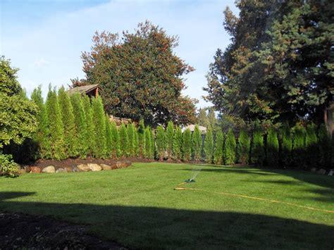 Planting Cedar Hedges In Vancouver « Abbotsford Cedar Tree