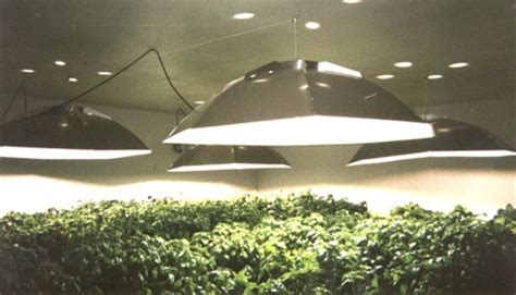 hid grow lights top four most effective types of grow lights stoner things