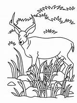 Coloring Grassland Animals Pages Antelope Drawing Savanna Animal Realistic African Colouring Printable Grasslands Funny Zoo Sheet Population Getdrawings Draw Tree sketch template