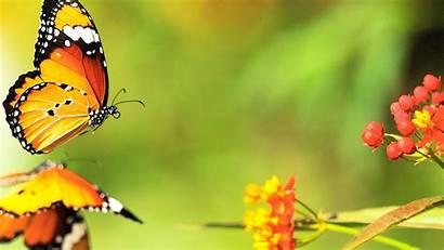 Butterfly Butterflies Desktop Album Wallpapers Pretty 10wallpaper