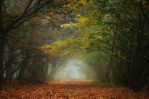 Nature, Landscape, Fall, Forest, Mist, Morning, Leaves