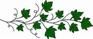 12+ Aka Ivy Leaf Clip Art
