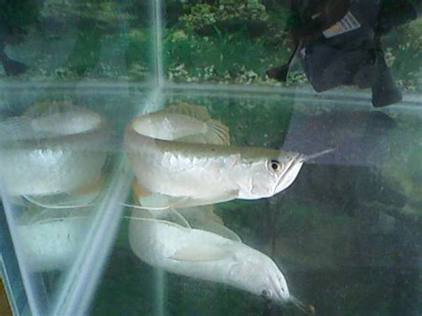 aquarium for sale johor used cheap fish tank 4ft 2ft new for sale adoption from johor pictures