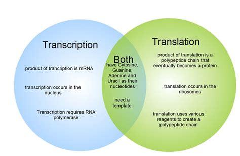 Transcription And Translation Venn Diagram gliffy diagram transcription and translation venn
