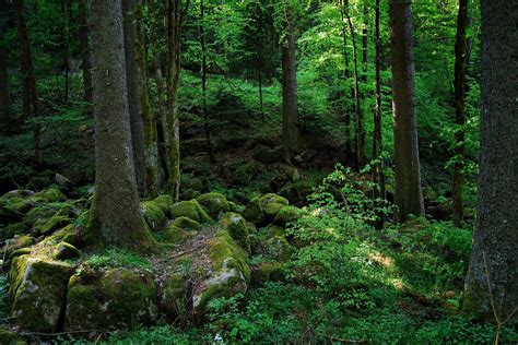 Ecotourism Germany The Black Forest Goes Green Eluxe