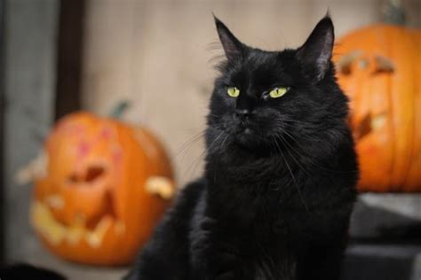 8 Facts About Black Cats Just In Time For Halloween
