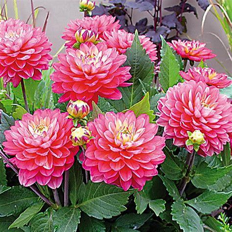Puķkopji izrāda jaunākās un krāšņākās vasaras puķes ...