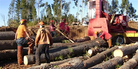 Forestry Jobs More Than Makework