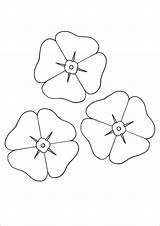 Template Poppy Coloring Flower Colouring Printable Pages Templates Poppies Remembrance Pdf Sheets Flowers Anzac Craft Activities Colour Drawing Crafts Clipart sketch template