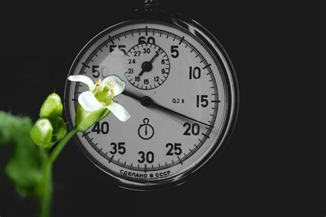 fine tuning  circadian clock roots  shoots medium