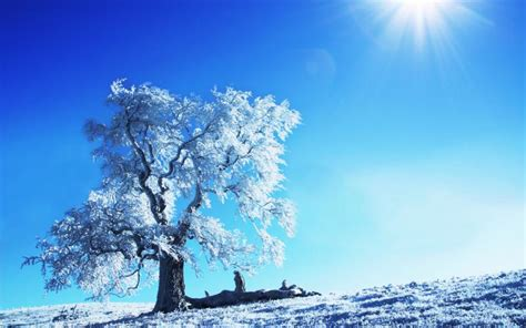 hd winter sunshine wallpaper